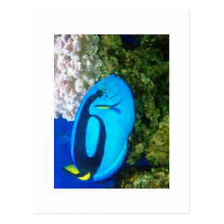 FISH 6 POSTCARD