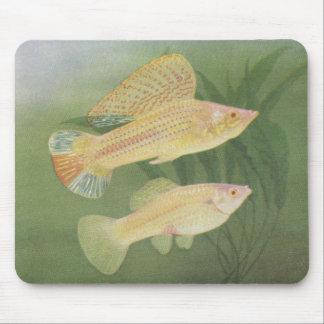 Fish - Albino Mollies - Poecilia latipinna Mouse Pad