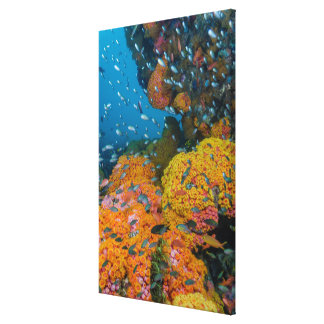 Fish Among Coral Reef Canvas Print
