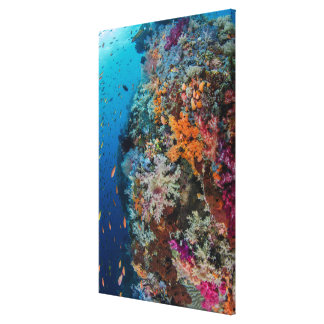 Fish and Coral Reef Scenic Canvas Print
