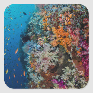 Fish and Coral Reef Scenic Square Sticker