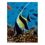 Fish Aquatic animals