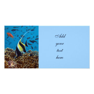 Fish Aquatic animals Photo Card