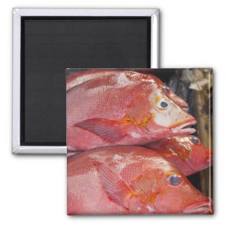 Fish at market, town of Kalabahi, Alor Island, Refrigerator Magnet