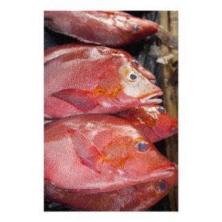 Fish at market, town of Kalabahi, Alor Island, Photographic Print