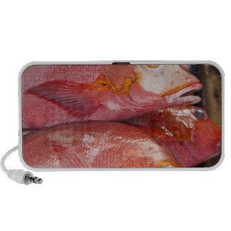 Fish at market, town of Kalabahi, Alor Island, Speaker System