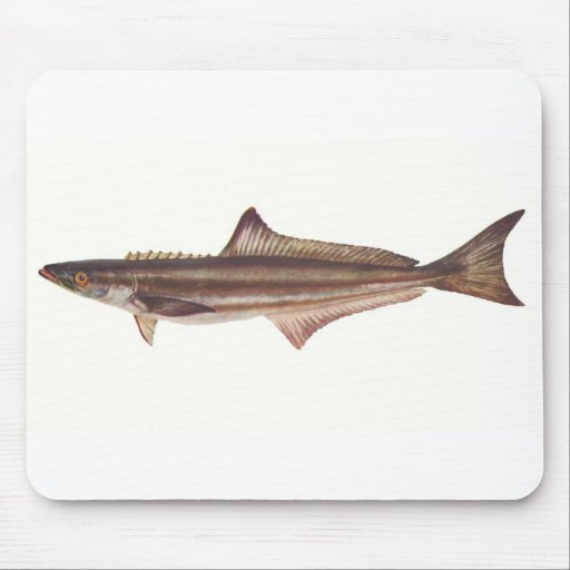 Fish - Black Kingfish - Rachycentron pondicerianum Mouse Mat