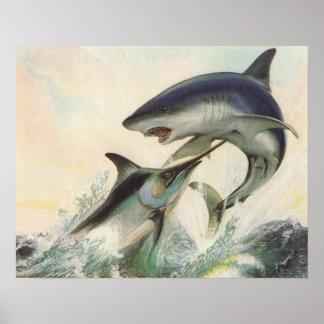Fish - Black Marlin & Mako Shark Posters