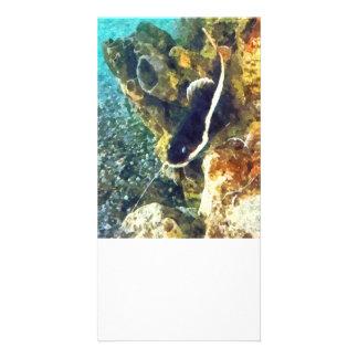 Fish - Catfish Swimming Forward Customized Photo Card