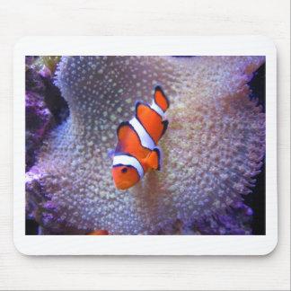 fish,clown fish mouse mats