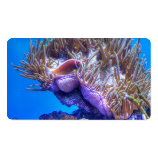 Fish Coral House Pack Of Standard Business Cards