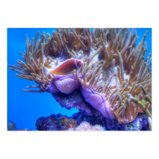 Fish Coral House Pack Of Chubby Business Cards