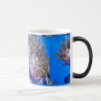Fish Coral House Mugs