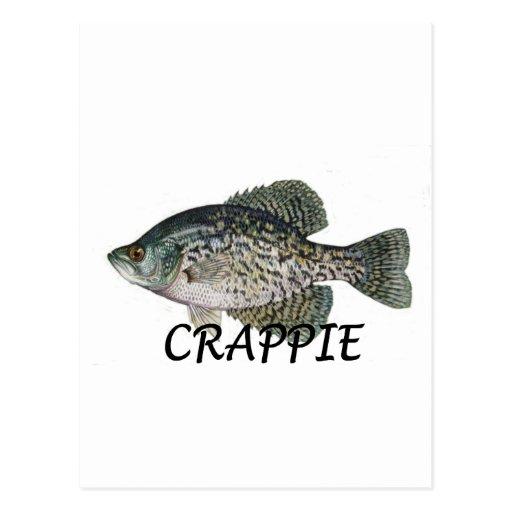 fish crappie post card
