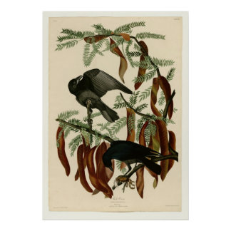 Fish Crow Poster
