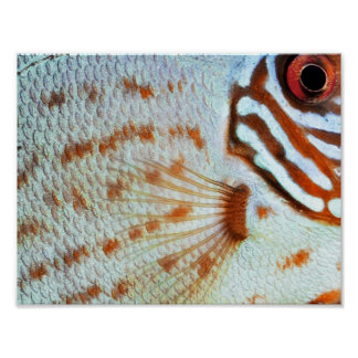 Fish Discus scales   Poster