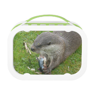 Fish Eating European Otter Lunch Box