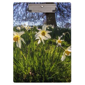 Fish Eye Daffodil Landscape Clipboard