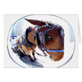 Fish-Eye Horse and Carriage Greeting Card