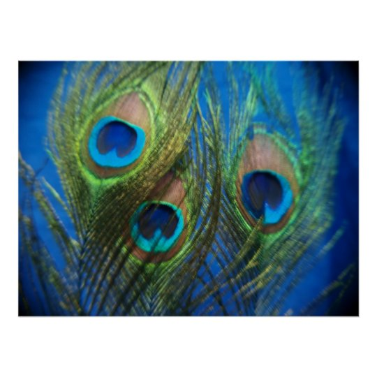 Fish Eye Peacock Still Life Poster