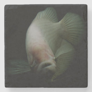 Fish in Tank Portrait Stone Coaster