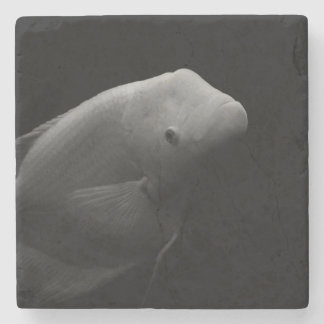Fish in Tank Stone Coaster