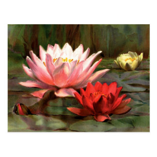 Fish in the Lily Pads - Postcard