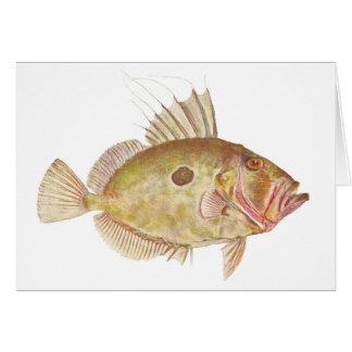 Fish - John Dory - Zeus faber Greeting Card