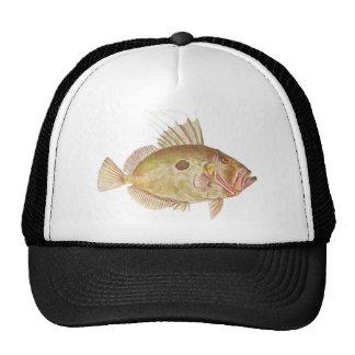 Fish - John Dory - Zeus faber Hats