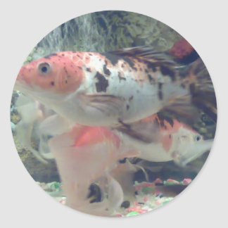 Fish Koi Round Sticker