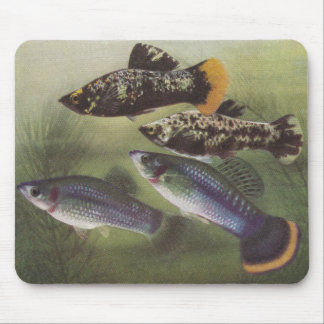 Fish - Mollies - Poecilia sphenops Mouse Pad