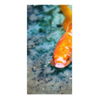 Fish Photo Card