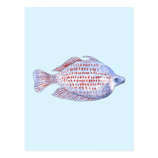 Fish. Red Line Rainbowfish. Postcard