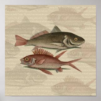 fish red perch Vintage fisherman gift Print