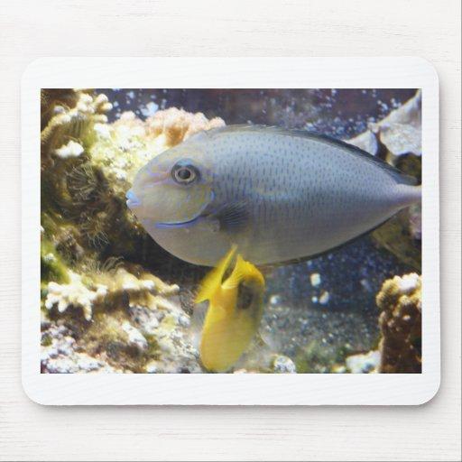 fish,salt water mouse pad