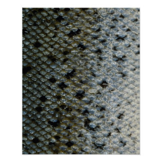 Fish Scales 2 Poster