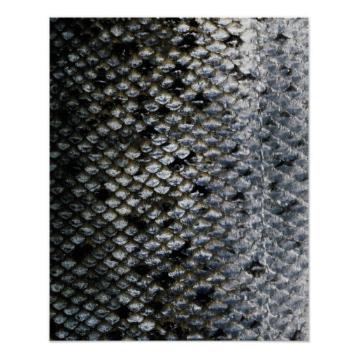 Fish Scales Posters