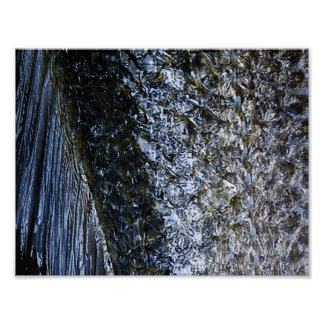 Fish Scales   Poster