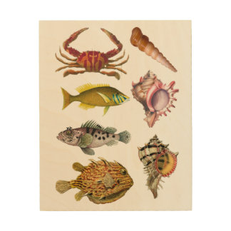 Fish, Shells, Sea Life, Nautical Wood Wall Decor