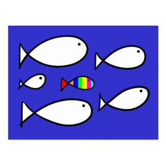 Fish Solo Colour Postcard