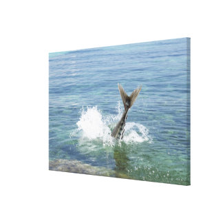 Fish splashing in the sea canvas print