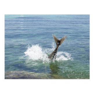 Fish splashing in the sea postcard