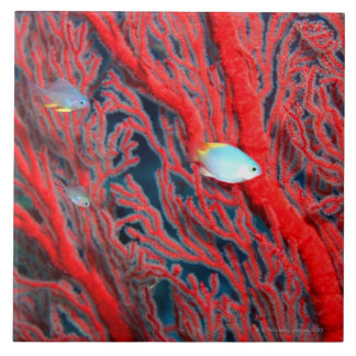 Fish swimming in coral large square tile