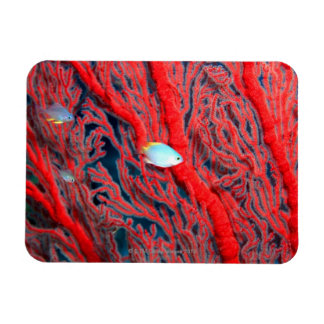 Fish swimming in coral magnet