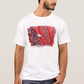 Fish swimming in coral T-Shirt
