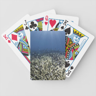 Fish swimming over dead reef bicycle playing cards