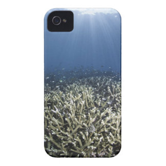 Fish swimming over dead reef Case-Mate iPhone 4 cases