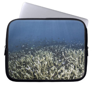 Fish swimming over dead reef computer sleeves