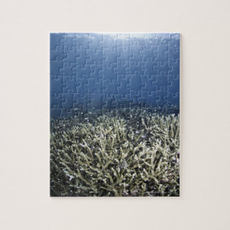 Fish swimming over dead reef jigsaw puzzle