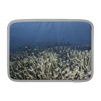 Fish swimming over dead reef sleeve for MacBook air